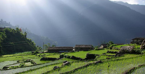 Explore Nepal: Terrace Farming